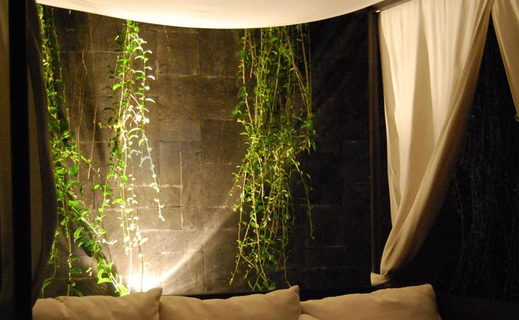 観葉植物を照らして、葉の影を楽しむ